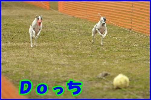 DSC_2611.jpg
