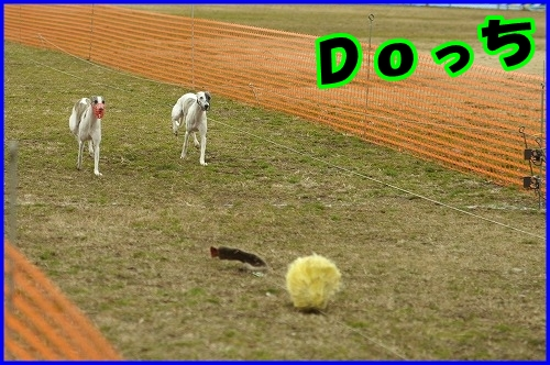 DSC_2612_20120229000443.jpg
