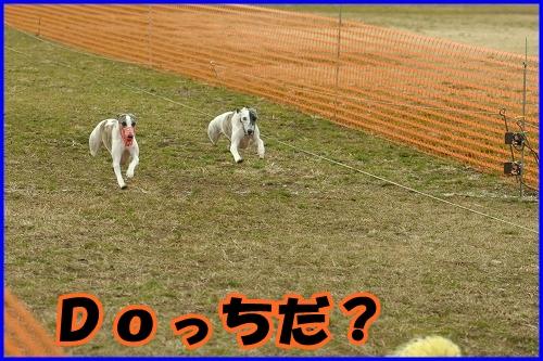 DSC_2613_20120229000443.jpg
