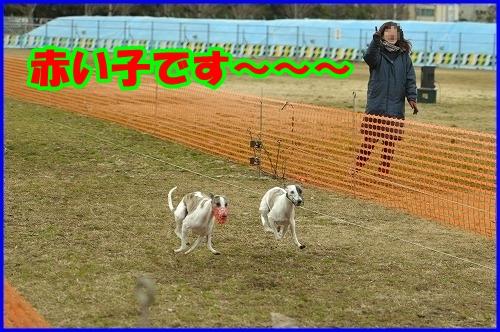 DSC_2615_20120229000558.jpg