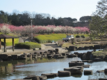 大高公園日本庭園梅