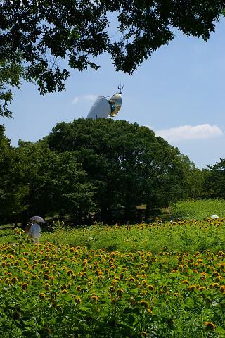 太陽の塔とヒマワリ
