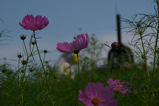 花の丘では