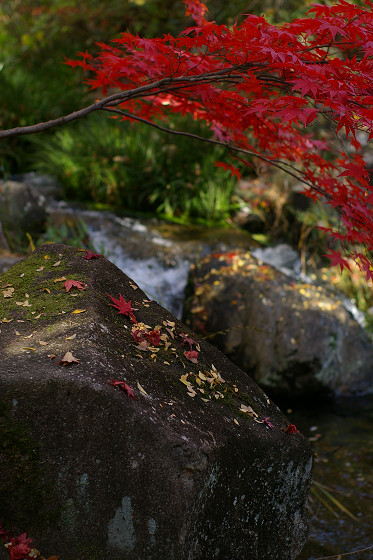 散り紅葉ー岩