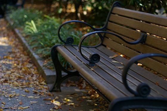 ベンチの落葉