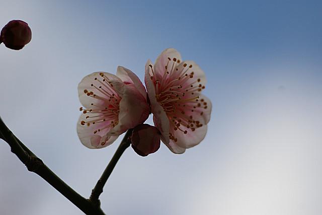 晴れ間に咲く