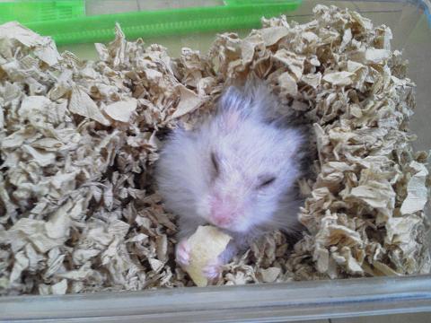眠いけど、リンゴ食べる~