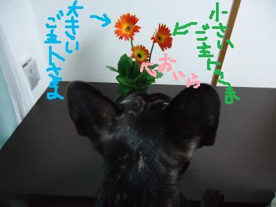 DSC00252_convert_20120221213528.jpg