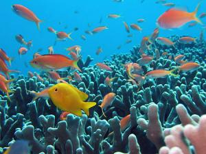 石垣島サンゴ礁