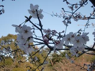 shukusho-CIMG1789_20110407000116.jpg