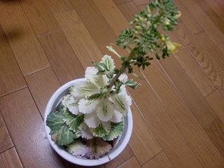 shukusho-CIMG1863.jpg