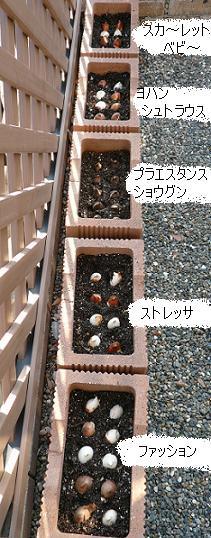 P1350466_東花壇