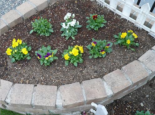 P1350728_コーナー花壇