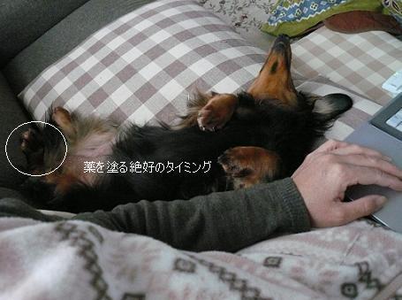 P1360067_チョコちゃん