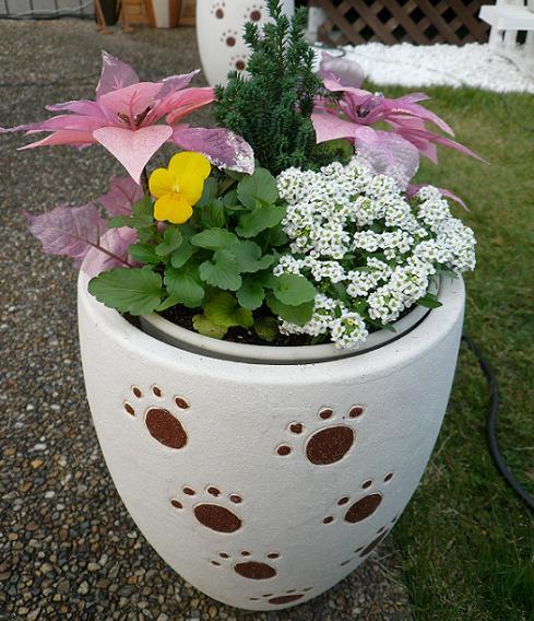 P1360037_肉球の鉢植え