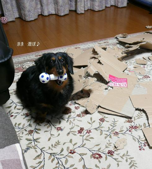 P1360103_チョコちゃん1