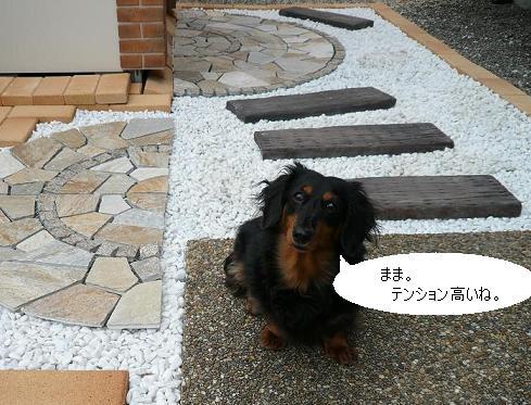 P1350387_chocou.jpg