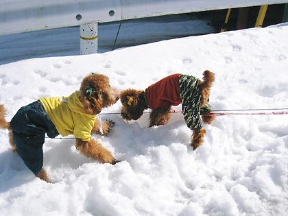 雪玉投げて!