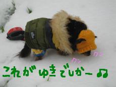 雪とふれあう