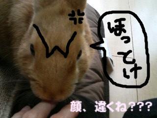 wario2.jpg