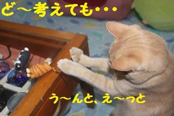 230404つみ猫7