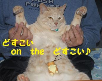 230404つみ猫4