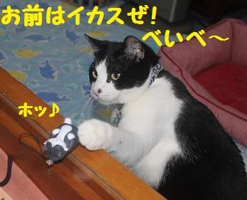 230404つみ猫13