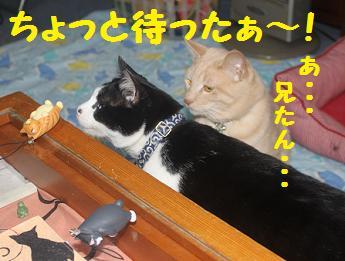 230404つみ猫9