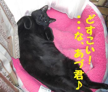 230404つみ猫14