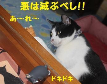 230404つみ猫12