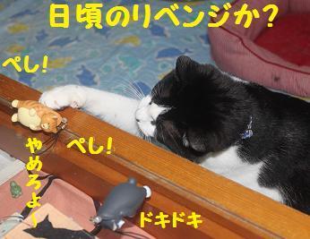 230404つみ猫11