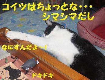 230404つみ猫10