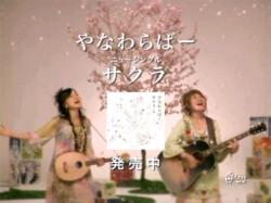 Yana-Sakura0805.jpg