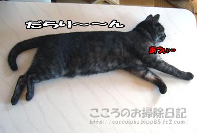 atsuiribu2-2011