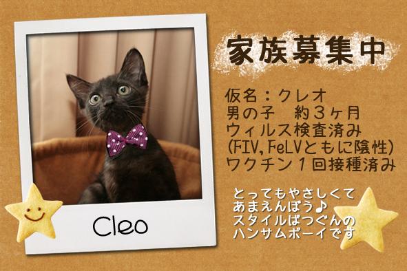 cleokun