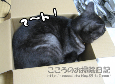 hakoribu3-2011