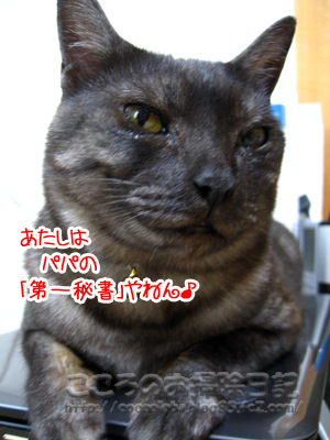 hishoribu2-2011