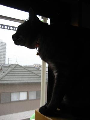 osotoribu2-2011