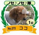 neko-1.jpg