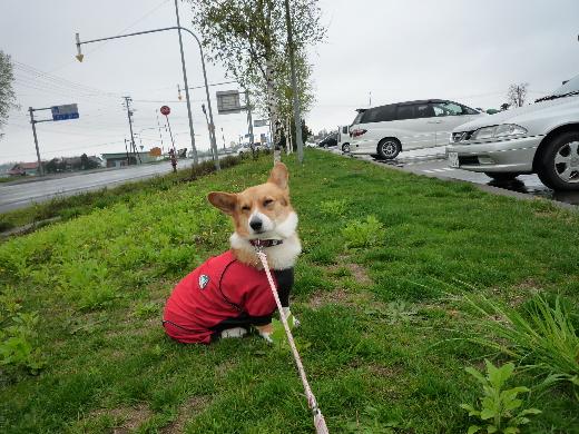 5散歩拒否