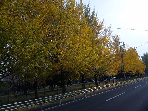 2011_1126ココバニラブログ0029
