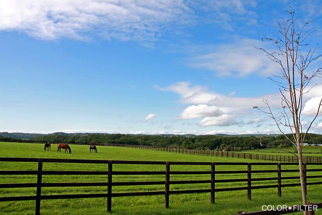 晴れの日の牧場