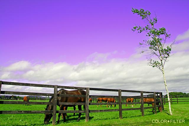 幻想の日高の牧場