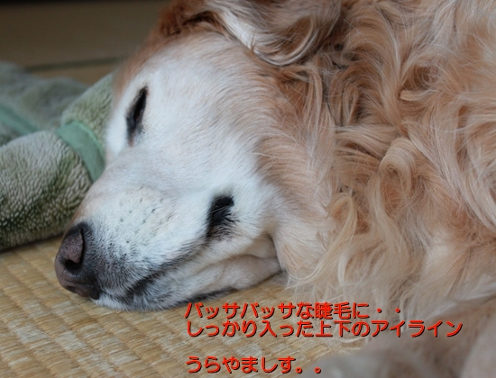 IMG_6759_R.jpg