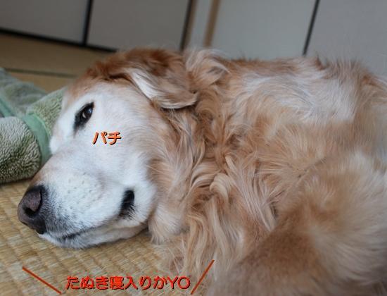 IMG_6762_R.jpg