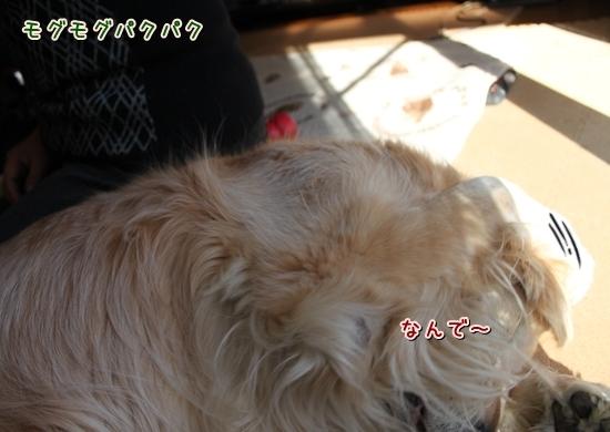 IMG_7224_R.jpg