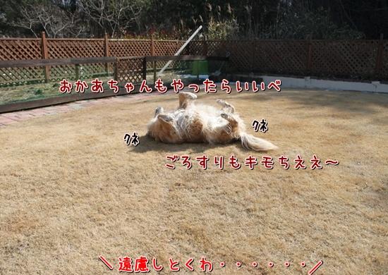 IMG_7301_R.jpg