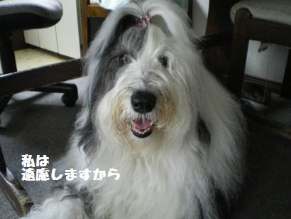 Cookie_20110511225310.jpg