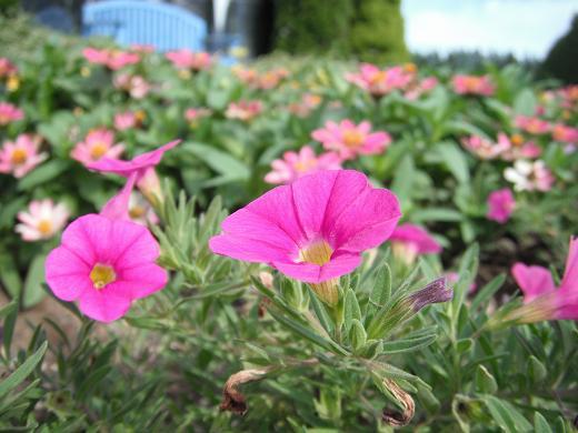 110718-09flower.jpg