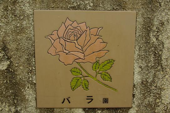 110528-10rose garden1